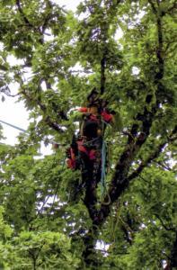 Elle est arboriste-grimpeuse à Oyonnax